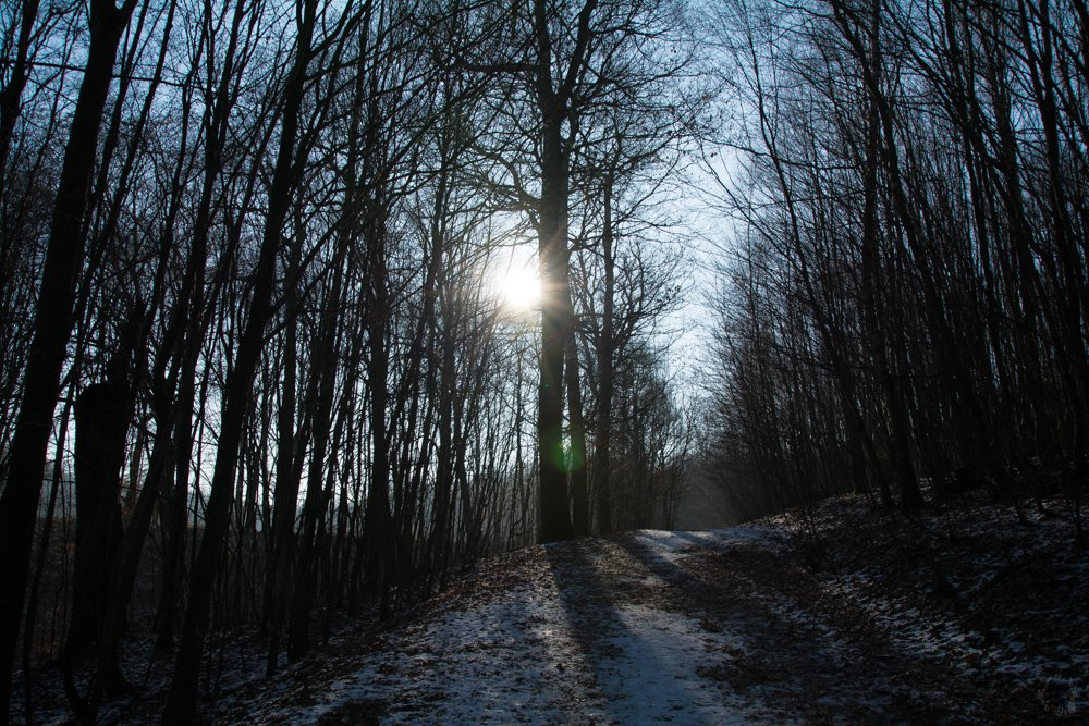 Licht im Schatten | Eine Sonntagsrunde auf Glatteis um den Heinitzer Weiher | Photo Diary
