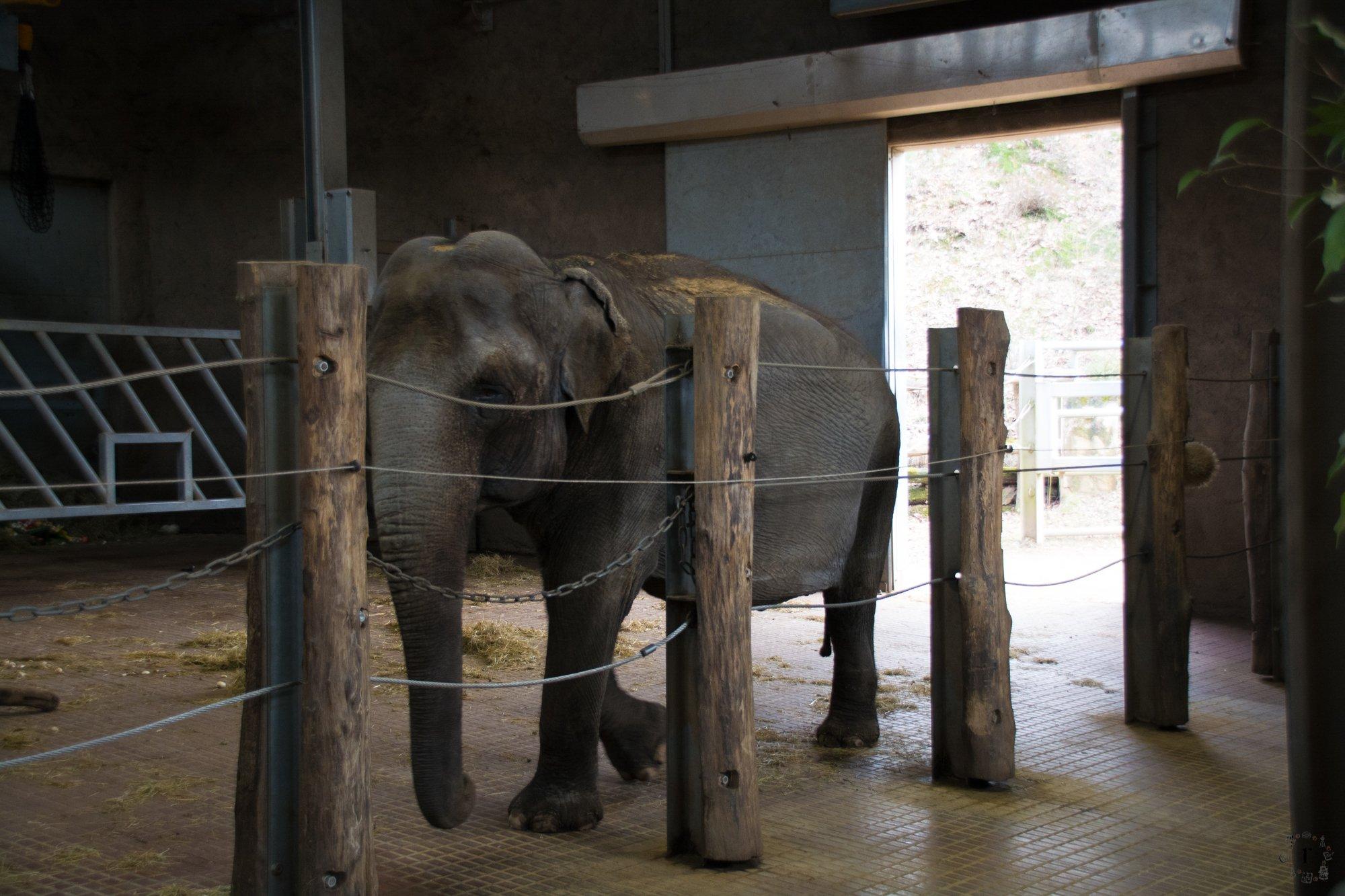 Neunkircher Zoo - Elefanten