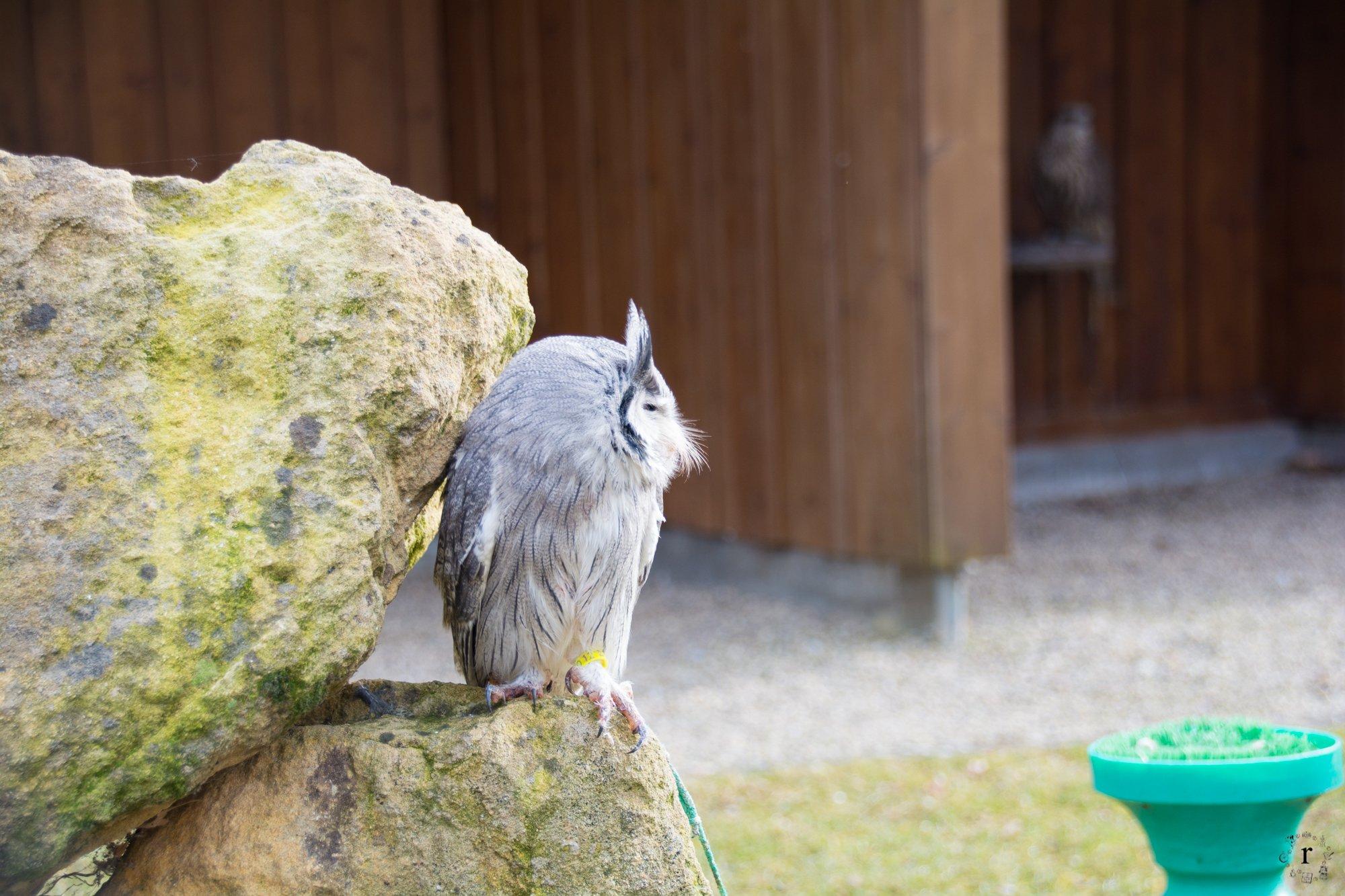 Neunkircher Zoo - Eule