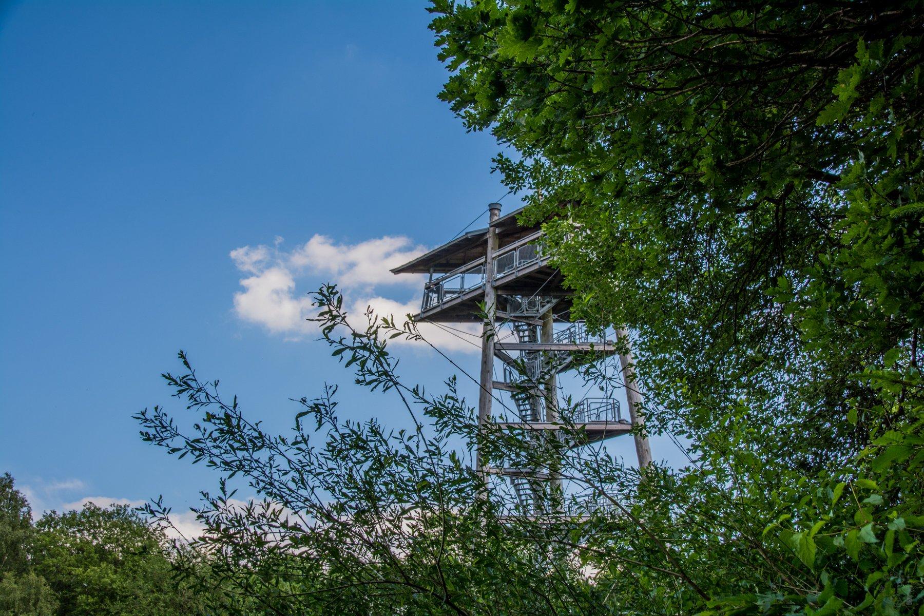 Zauberwald im Birkenfelder Land